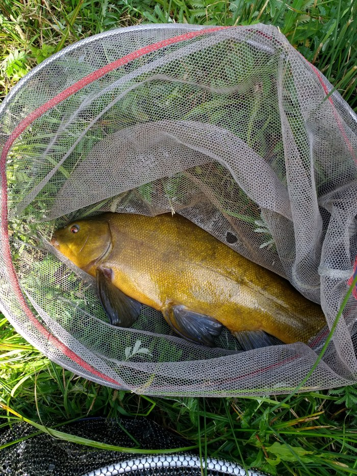Tench 4-4